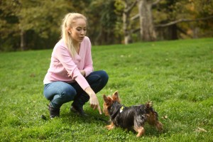 Become a certified dog trainer – learn the Lie Down command for all dogs