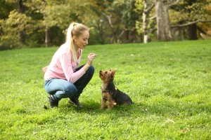 Dog trainer careers: Mikaela the dog behavior counselor in NYC