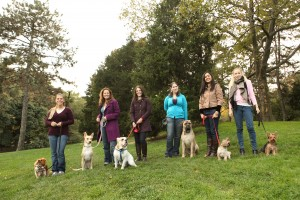 Outdoor training class – One of the CATCH Dog Trainer Programs