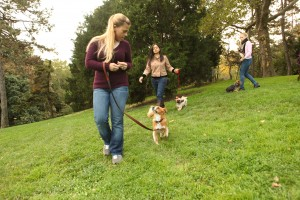 Loose-Leash Walking: certified dog trainer program skills
