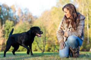 CATCH – The Best Dog Trainer School!