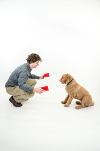 "Using a ""two-cups"" test to reveal a dog's unique style of intelligence."
