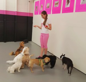 Oksana practicing group sits at work at a doggy daycare.