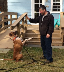Tony Ricardi working with his student dog, Amos. Way to go!