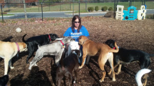 Terri spending valuable time with the shelter dogs at St. Hubert's Animal Welfare Center.