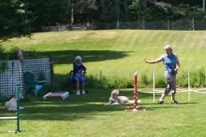 Practicing Croquet and Down Stays with Mentor Trainer, Dee Ganley.