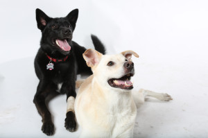 Lindsay's beautiful dogs, Ty and Roxie, in the studio.