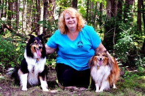 Stacey with her 2 shelties, Cody and Quinn.