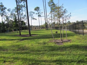 Dr. Phillips Dog Park in Orlando, Florida