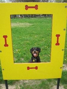 Fairmont Dog Park in Kalamazoo, MI