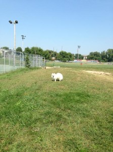 Gano Street Dog Park in Providence, Rhode Island