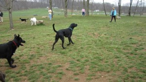 John Rudy Dog Park in York, PA