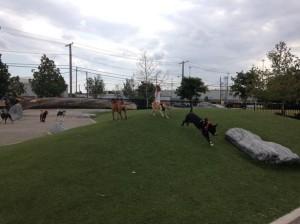 Locust Point Dog Park at Latrobe Park in Baltimore, MD