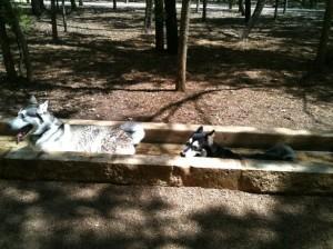 Phil Hardberger Dog Park in San Antonio, TX