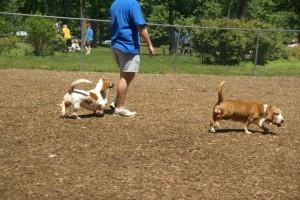 Talley Day Bark Park in Wilmington, Delaware