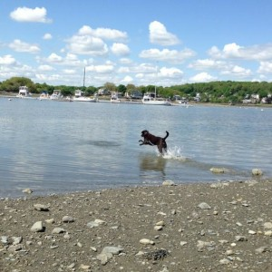 Stoddard Neck Dog Park in Weymouth, Massachusetts