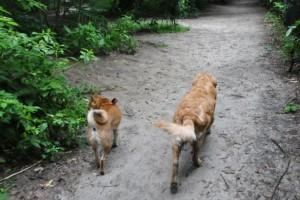 Timber Creek Dog Park in NJ