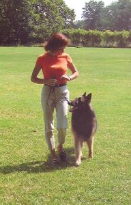 Pia Silvani demonstrates Heel with her Belgian Tervuren, Lance