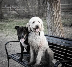 Make friends at Tanner Dog Park in Salt Lake City, UT Photo source: www.bringfido.com
