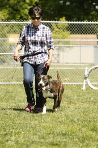 dog trainer career school