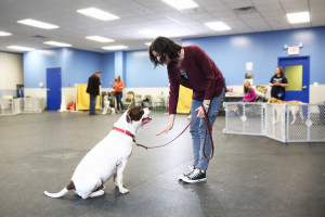 become a dog trainer school