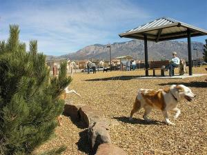 Space to run at North Domingo Baca Dog Park in Albuquerque, NM Photo source: www.bringfido.com