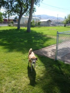 Come play with friends at the Old Town Bark Park in Pocatello, ID Photo source: www.bringfido.com