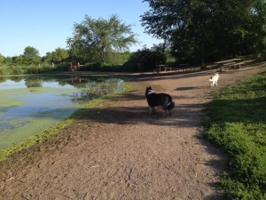 Go for a run at Elm Creek Reserve Dog Park in Maple Grove, MN Photo source: www.bringfido.com