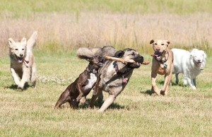 Fun and games at High Sierra Dog Park in Billings, MT Photo source: www.bringfido.com
