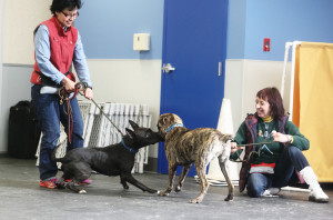 Jennifer and Pia Silvani working hands-on with the shelter dogs at St. Hubert's.