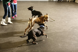 Shelter dog play group at the CATCH workshop